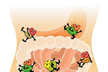 men vi sinh là gì và công dụng 2